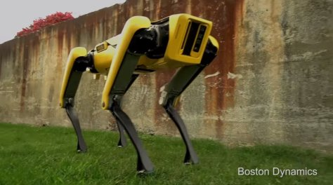 boston dynamics dog